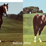 Bonnett, Kim before after Horse web